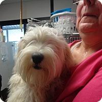 Adopt A Pet :: Filmore - baltimore, MD