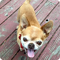 Adopt A Pet :: Donald Drumpf - Denver, CO
