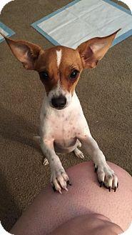 Dachshund/Chihuahua Mix Dog for adoption in Macon, Georgia - Jethro