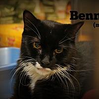 Adopt A Pet :: Benny - Springfield, PA