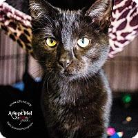 Adopt A Pet :: A..  Smoke - Mooresville, NC