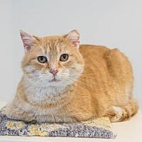 Adopt A Pet :: Daniel Tiger - St. Paul, MN