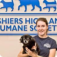 Adopt A Pet :: Sophie - Cashiers, NC