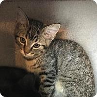 Adopt A Pet :: Erin - Aurora, CO