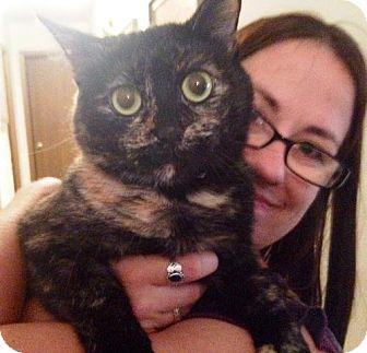Domestic Shorthair Cat for adoption in Northeast, Ohio - Bette Davis