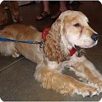 Adopt A Pet :: Anthony - Sugarland, TX