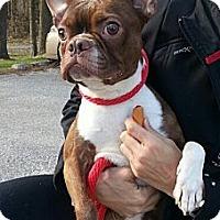 Adopt A Pet :: Brooklyn - Reisterstown, MD