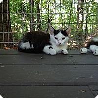 Adopt A Pet :: Fern - Monroe, GA