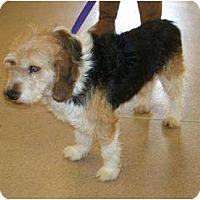 Adopt A Pet :: GeorgePENDING - Toronto/Etobicoke/GTA, ON