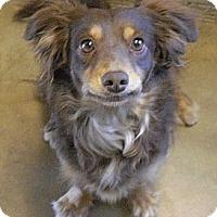 Adopt A Pet :: Katie - Wickenburg, AZ