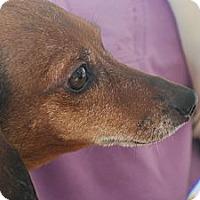 Adopt A Pet :: Smokey - Ogden, UT