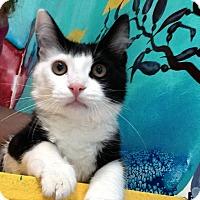 Adopt A Pet :: Phantom - Newport Beach, CA