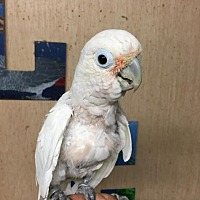 Adopt A Pet :: Lady - Woodbridge, NJ