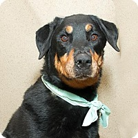 Adopt A Pet :: Cora - Tracy, CA