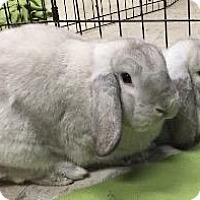 Adopt A Pet :: Dinah - Woburn, MA