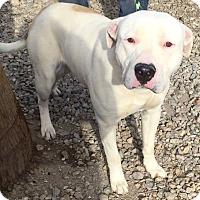 Adopt A Pet :: Paulie - Las Vegas, NV