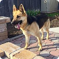 Adopt A Pet :: Leah - New Oxford, PA