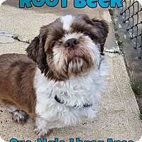 Adopt A Pet :: Root Beer - Jackson, NJ
