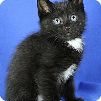 Adopt A Pet :: Bubba - Winston-Salem, NC