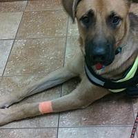 Adopt A Pet :: Duke (Guest) - Roswell, GA