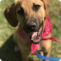 Adopt A Pet :: Georgia - E. Greenwhich, RI