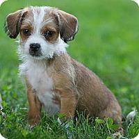 Adopt A Pet :: Tito - Providence, RI