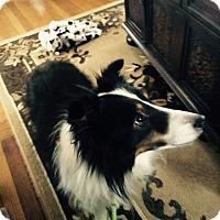 Adopt A Pet :: Chance (Adoption Pending) - Pittsburgh, PA