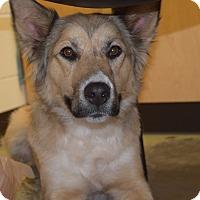 Adopt A Pet :: BRYNN - MILWAUKEE, WI