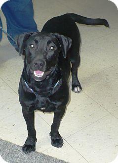 Labrador Retriever Mix Dog for adoption in Eastpoint, Florida - Bessie