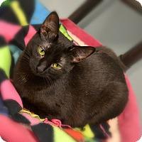 Adopt A Pet :: Diamond - Byron Center, MI