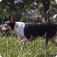 Adopt A Pet :: McWinky - Warner Robins, GA