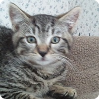 Adopt A Pet :: Rudy - Central Falls, RI