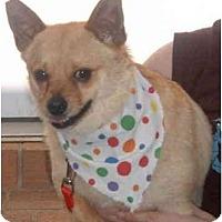 Adopt A Pet :: Rudy - Pembroke Pines, FL