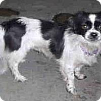 Adopt A Pet :: Asia - Seattle, WA