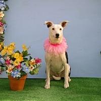Adopt A Pet :: Dee Dee - Corona, CA