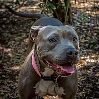 Adopt A Pet :: Sweetie - Jacumba, CA