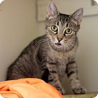 Adopt A Pet :: Tigie - Dalton, GA