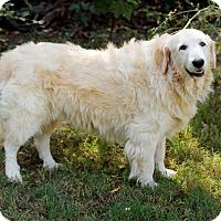 Adopt A Pet :: Marley *Adopted - Tulsa, OK