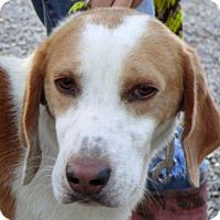 Adopt A Pet :: Rex - Shelter Island, NY
