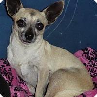 Adopt A Pet :: Maui - San Diego, CA