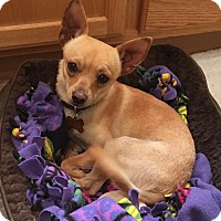 Adopt A Pet :: Fonzie - Las Vegas, NV