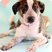 Adopt A Pet :: Sachi - Waldorf, MD