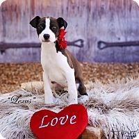 Adopt A Pet :: Lexus - Lubbock, TX