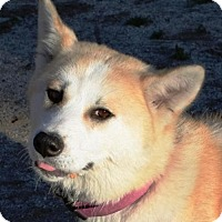 Adopt A Pet :: Misaki - Romoland, CA