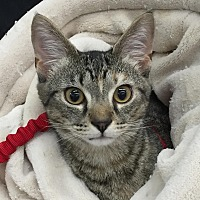 Adopt A Pet :: Marlo - Port Republic, MD