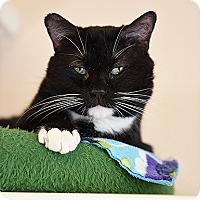 Adopt A Pet :: Ace - Kanab, UT