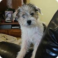 Adopt A Pet :: Missy (Extremely Urgent) reduc - Staunton, VA
