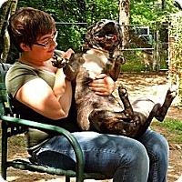 Adopt A Pet :: Sassy - Lakeville, MA