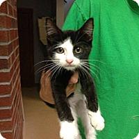 Adopt A Pet :: Logan - Lancaster, MA