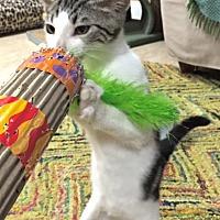 "Adopt A Pet :: Slava aka ""Sly"" - Deerfield Beach, FL"